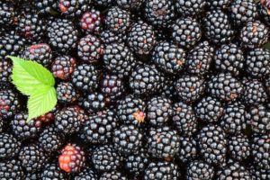 in this week's harvest-Blackberries