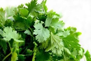in this week's harvest-Cilantro