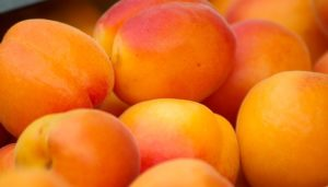 this week's harvest-Apricot