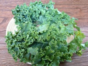 in this week's harvest-Curly+Kale