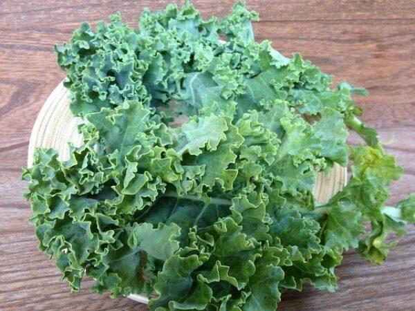 in-this-week's-harvest-Curly+Kale
