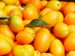 this week's harvest-kumquats
