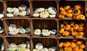 this week's harvest-patty pan squash