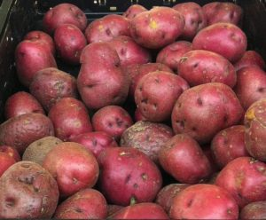 this week's harvest-Red Potato