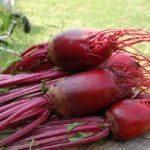 this weeks organic harvest beets