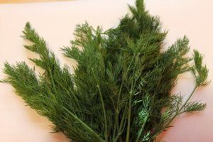 in this week's harvest dill