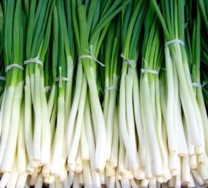 this week's harvest green onions