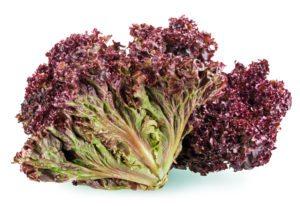this weeks harvest red leaf lettuce