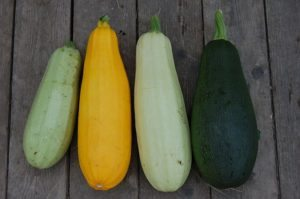 this week's harvest-Squash