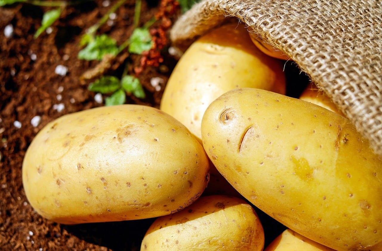 commercial potato farming