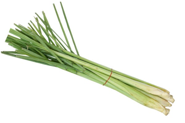 lemongrass - this week's harvest