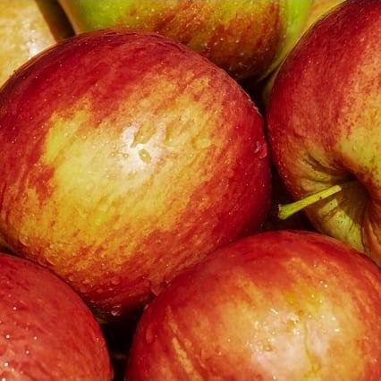 apple-gala