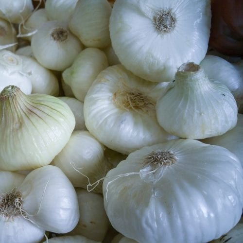 onion-mini-white