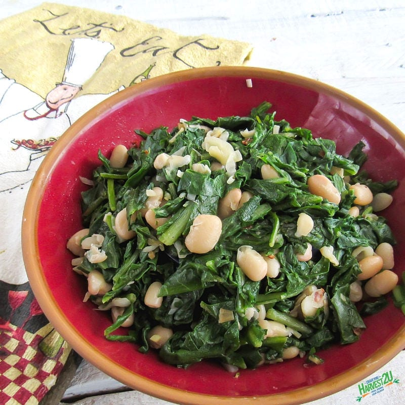 Chicory and Beans