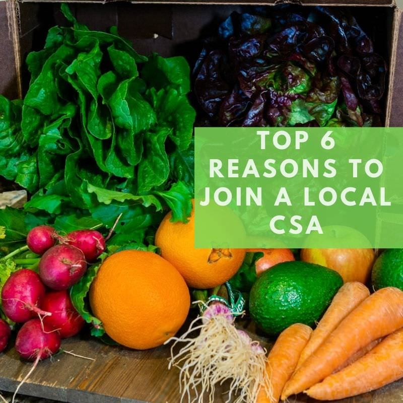 Top 6 reasons to join Harvest2U's CSA (1)