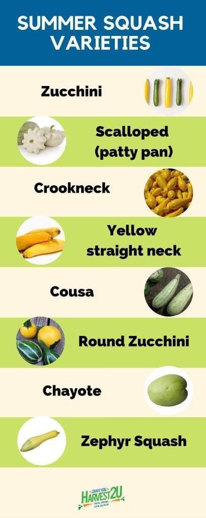 summer squash info graphic