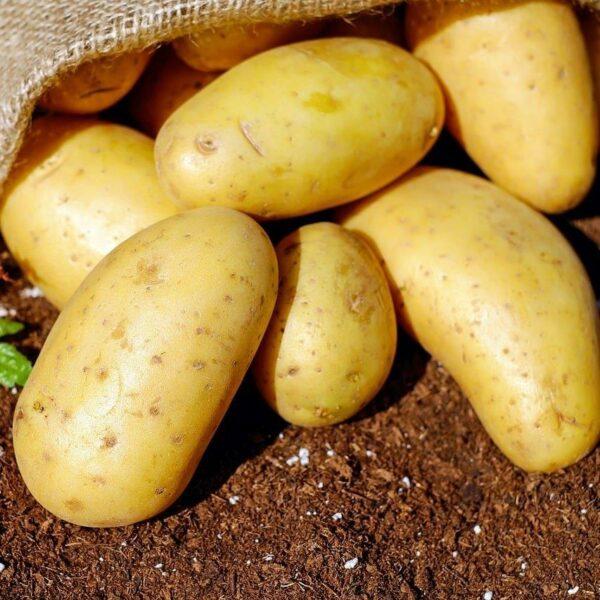 potatoes-yukon-gold