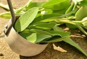 dehydrating herbs sage