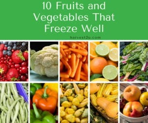 Freeze your Harvest