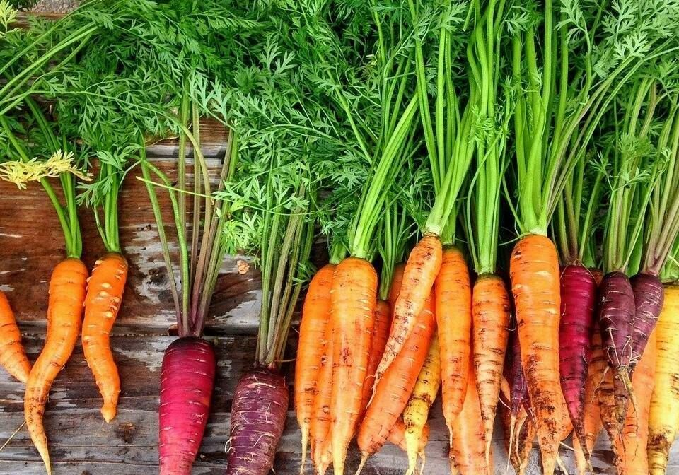 Health Facts About Carrots